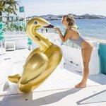 Gouden zwaan - Swim essentials